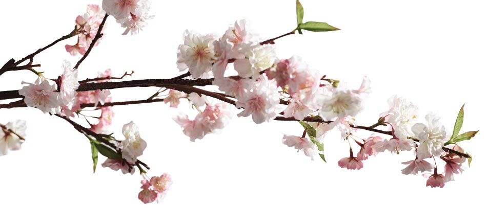 A Sparkling New Cherry Orchard Blooms on Broadway